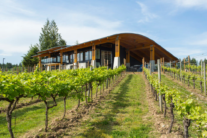 blue-grouse-estate-winery-vineyard